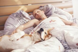 gulēt ar suni