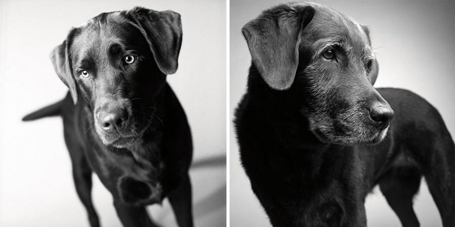 Corbet - 2 gadi un 11 gadi