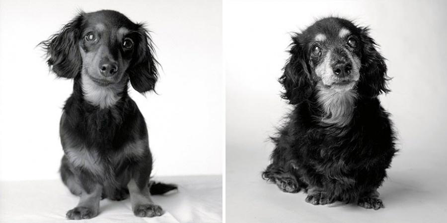 Lilī — 8 mēneši un 15 gadi