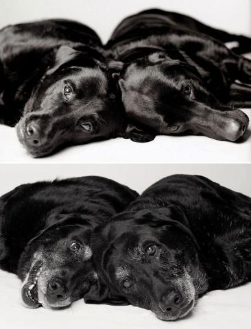 Maddie un Ellie —  7 un 6 gadi; 14 un 13 gadi