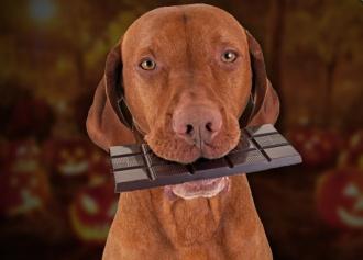 produkti, kas nogalina suni