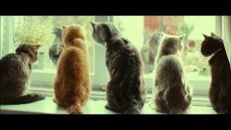 ko dara kaķis