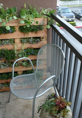 Lielisks vertikālais dārzs no parastas paletes. Iedēstiet vairākas iecienīto puķu vai citu augu šķirnes, ļaujiet tiem nedaudz paaugties parastajos - horizontālajos apstākļos, bet pēc tam pārstādiet vertikāli paletē.