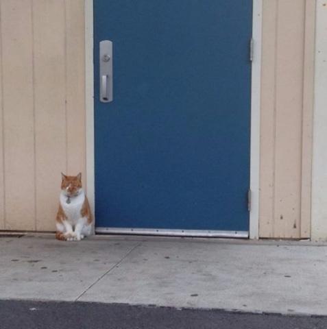Ambera Marientāla  kaķēnu Bubu mājās pārnesa 2009.gadā