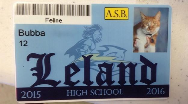 Drīz vien kaķis ieguva oficiālu studenta statusu