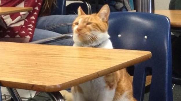 Buba ir vienīgais kaķis ASV vēsturē, kuram oficiāli piešķirts studenta statuss