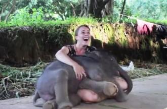 ziloņu mazuļi