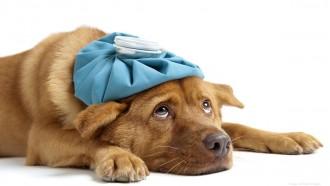 veterinārārsti brīdina
