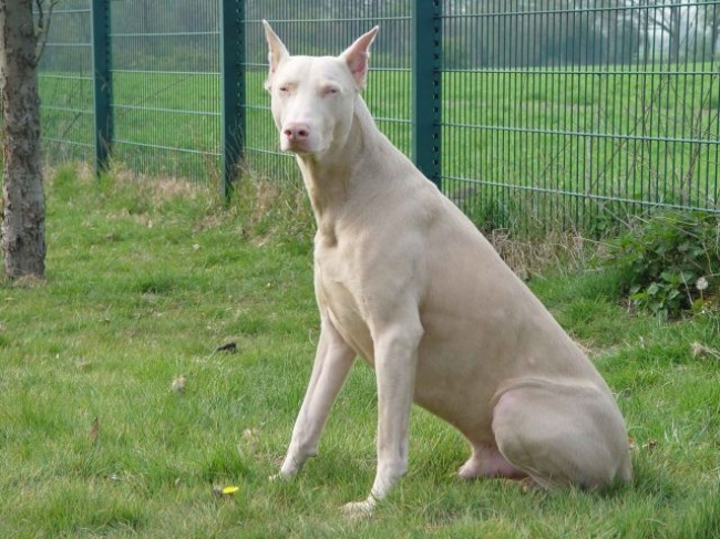 20-suni-kurus-radot-daba-bijusi-jautra-oma-09
