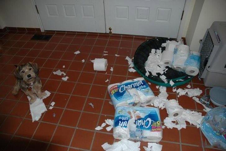 Nomaina tualetē papīra ruļļus