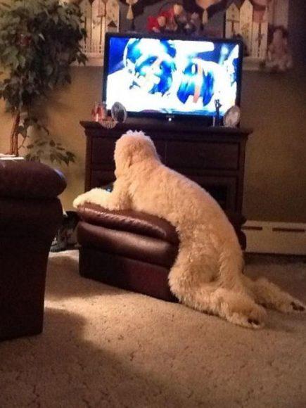 Skatās televizoru