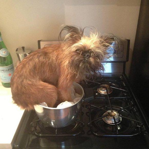 Gatavo vakariņas