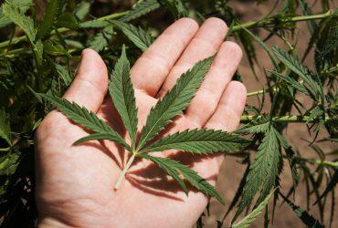 marihuānas legalizācija