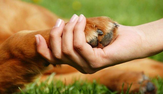 dzīvnieku aizstāvji