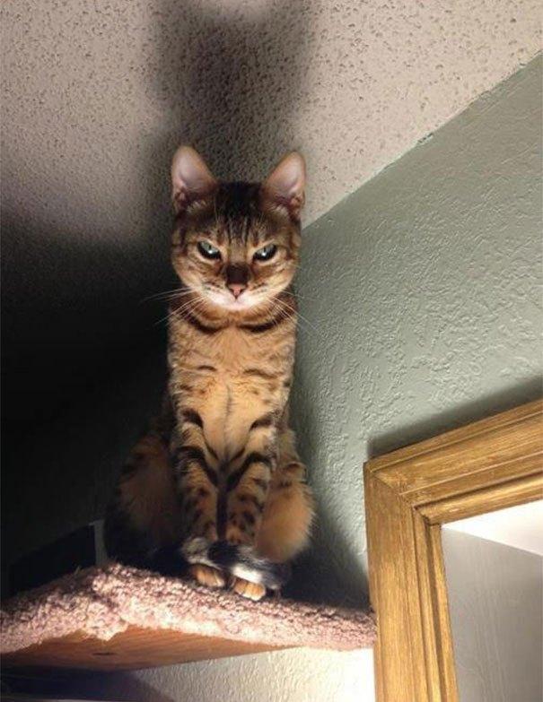 Dramatiskākais kaķis pasaulē