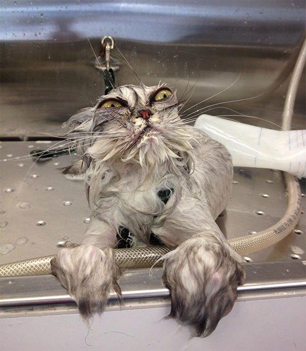 Nelabais dzīvo vannā