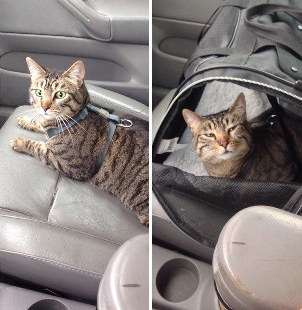 Ceļš uz veterināro klīniku: turp (attēls pa kreisi) un atpakaļ (attēls pa labi)