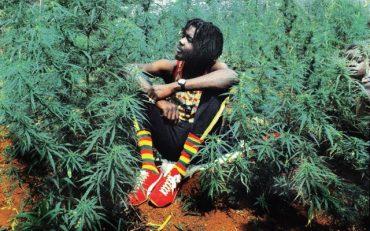 marihuāna