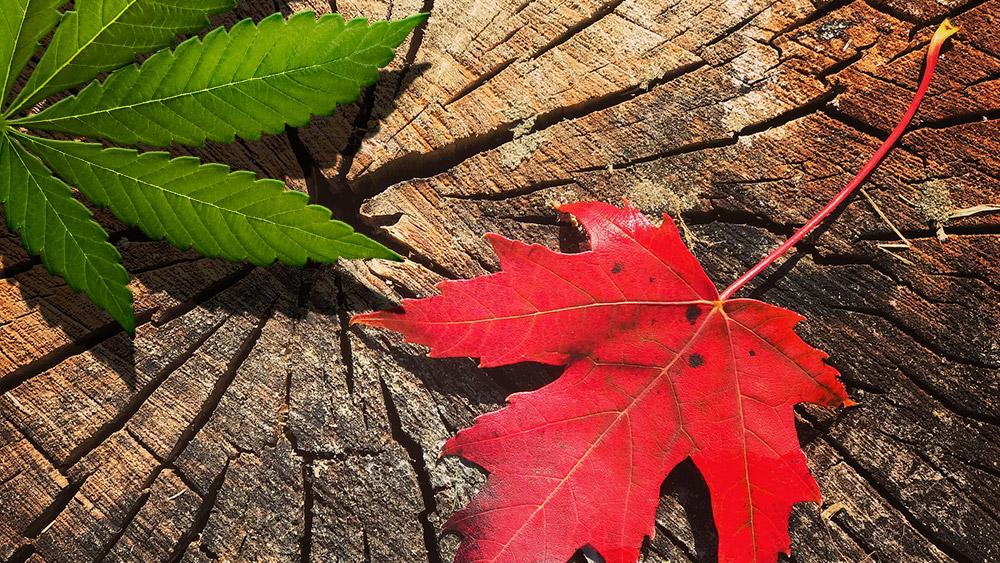 marijuana-legalization-in-canada
