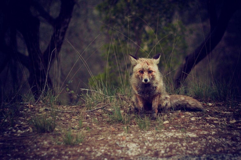 dzīvnieku aizsardzība