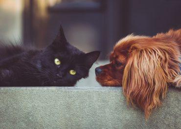 suns kaķis