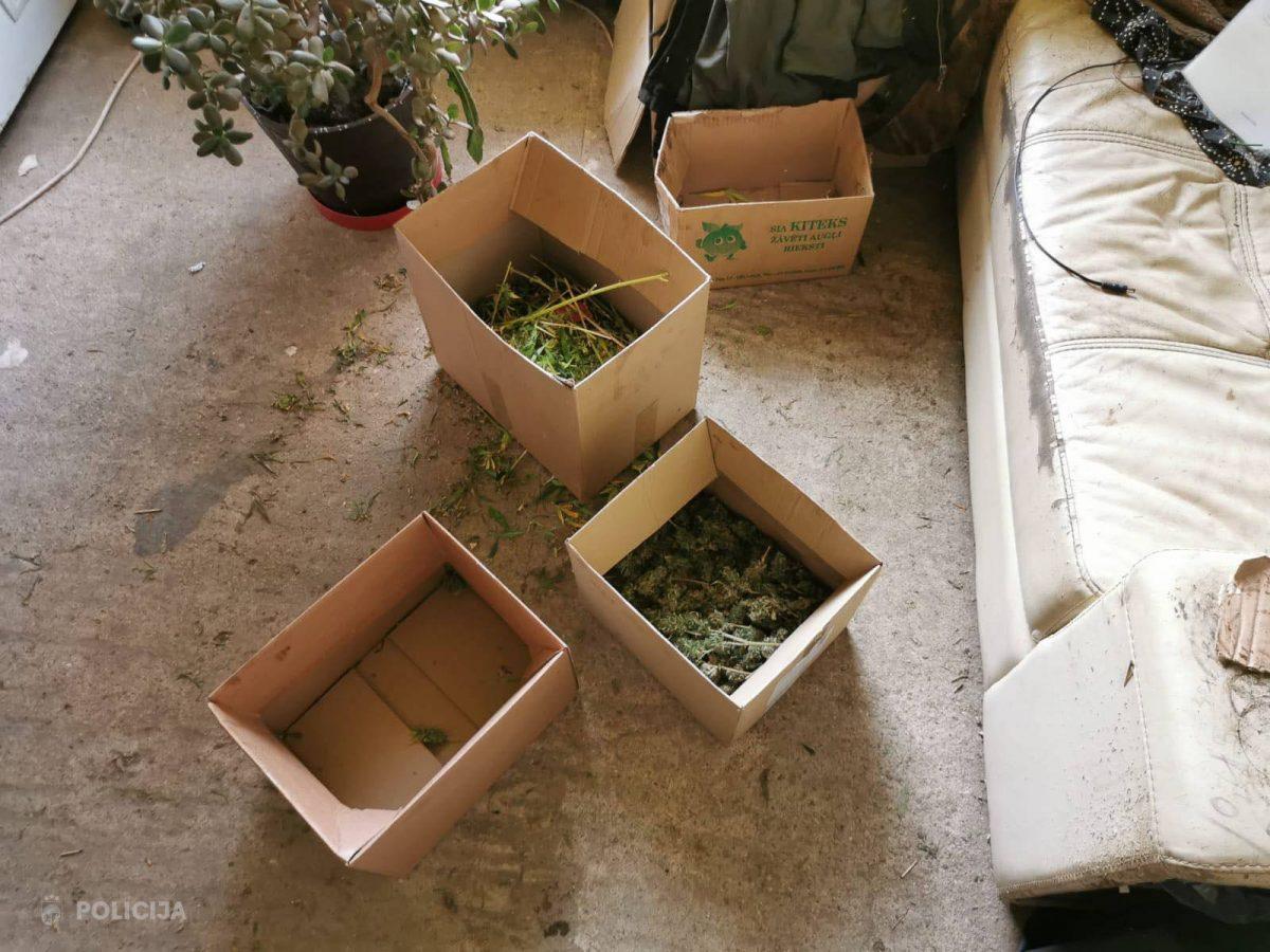 marihuānas audzētava